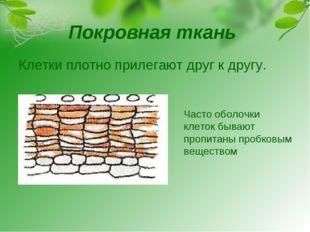Покровная ткань Клетки плотно прилегают друг к другу. Часто оболочки клеток б