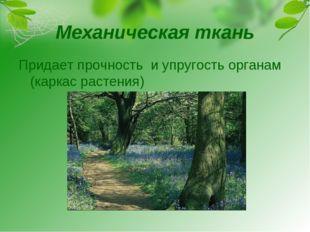 Механическая ткань Придает прочность и упругость органам (каркас растения)