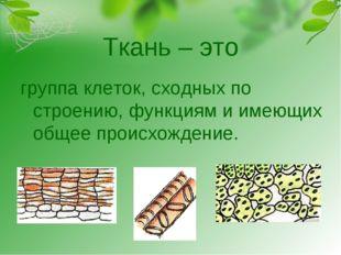 Ткань – это группа клеток, сходных по строению, функциям и имеющих общее прои
