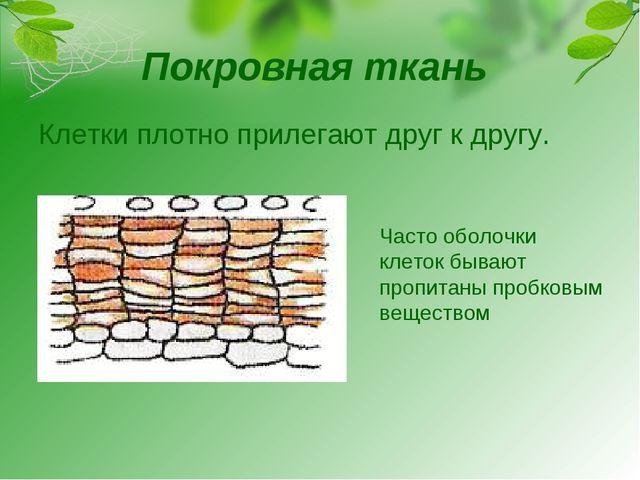 Покровная ткань Клетки плотно прилегают друг к другу. Часто оболочки клеток б...