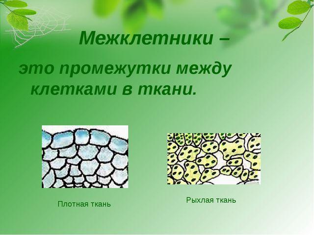 Межклетники – это промежутки между клетками в ткани. Плотная ткань Рыхлая ткань