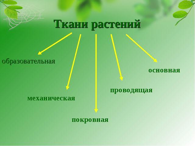 Ткани растений образовательная механическая покровная проводящая основная