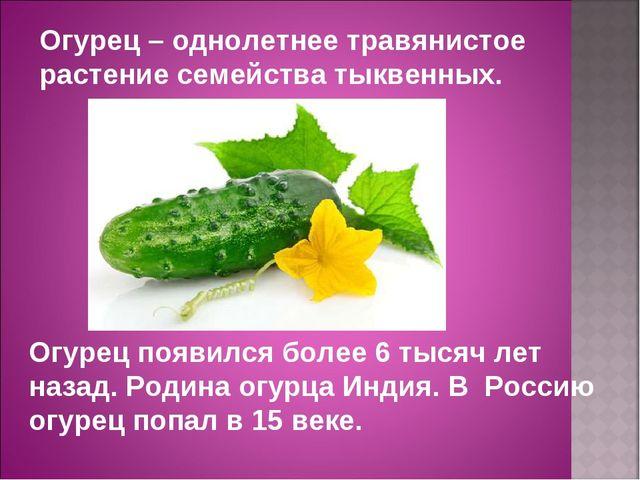 Огурец появился более 6 тысяч лет назад. Родина огурца Индия. В Россию огурец...