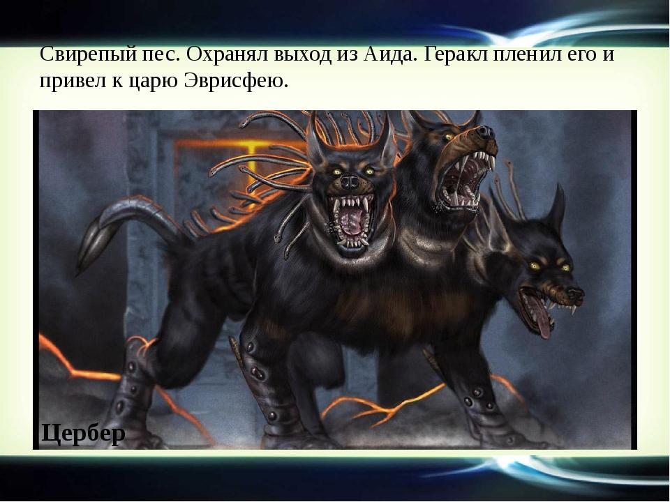 Свирепый пес. Охранял выход из Аида. Геракл пленил его и привел к царю Эврисф...