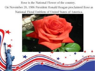 Rose is the National Flower of the country. On November 20, 1986 President Ro