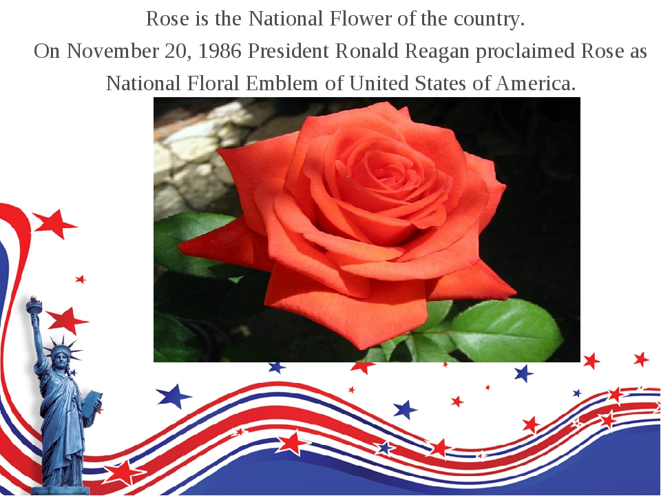 Rose is the National Flower of the country. On November 20, 1986 President Ro...