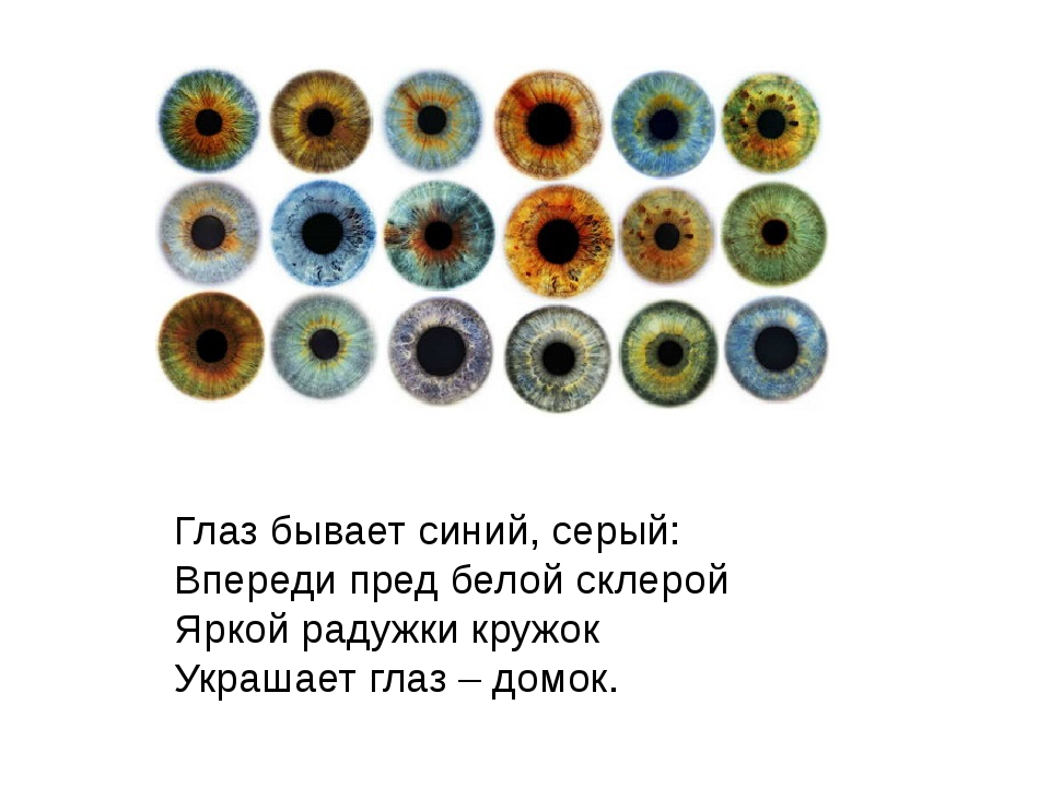 Глаз бывает синий, серый: Впереди пред белой склерой Яркой радужки кружок У...