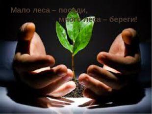 Мало леса – посади, много леса – береги!