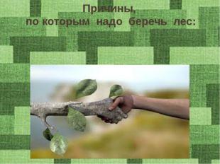Причины, по которым надо беречь лес: