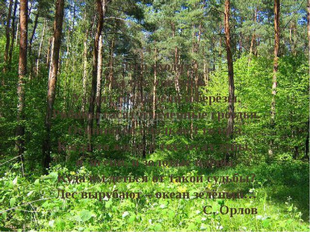 Леса уходят. Жалко мне леса. Уходят сосны, ели и берёзы. Рябины гасят пламен...