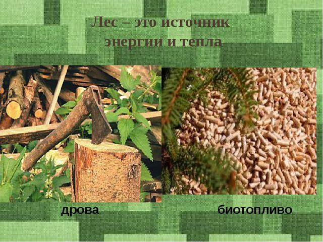 Лес – это источник энергии и тепла дрова биотопливо