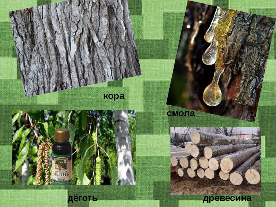 кора смола дёготь древесина