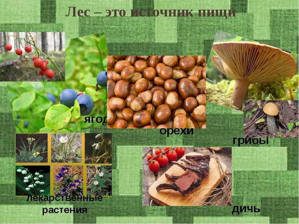 Лес – это источник пищи ягоды грибы орехи лекарственные растения дичь