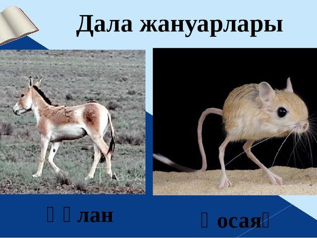 Дала жануарлары Қосаяқ Құлан