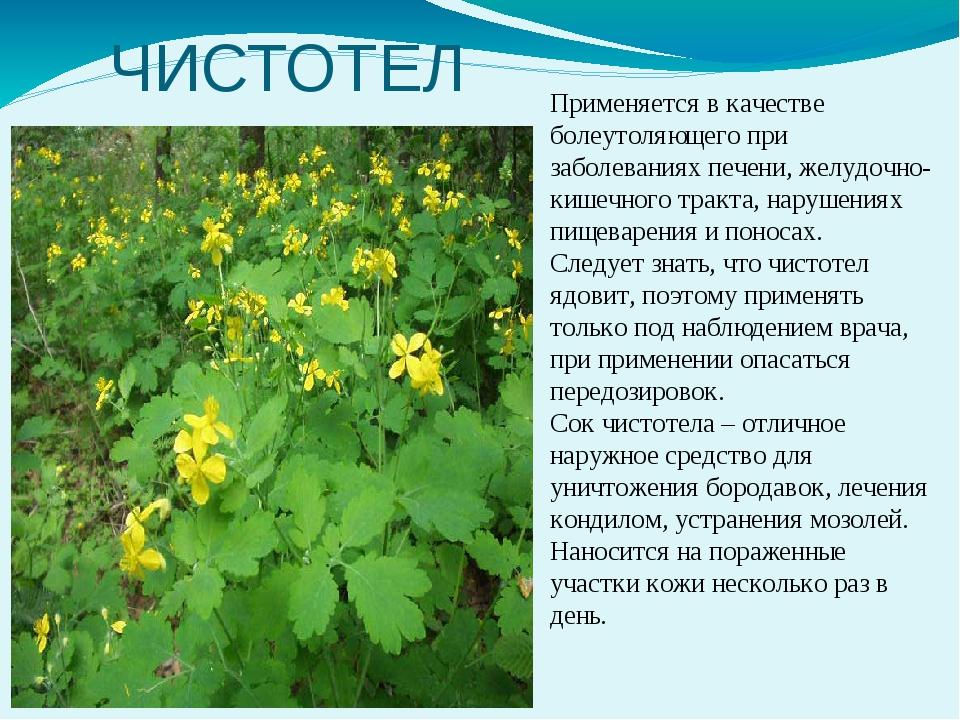 лекарственные растения кемеровской области фото состояние, остаётся