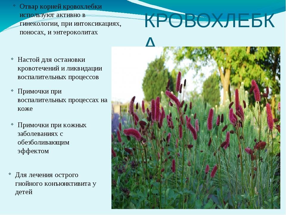 лекарственные растения кемеровской области фото госпитализации