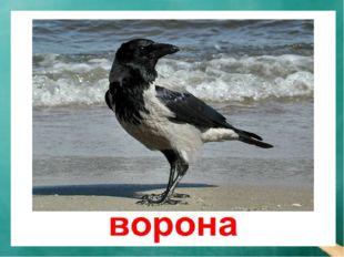 Речевая разминка — Кра! — кричит ворона. — Кража! Караул! Грабёж! Пропажа! Во