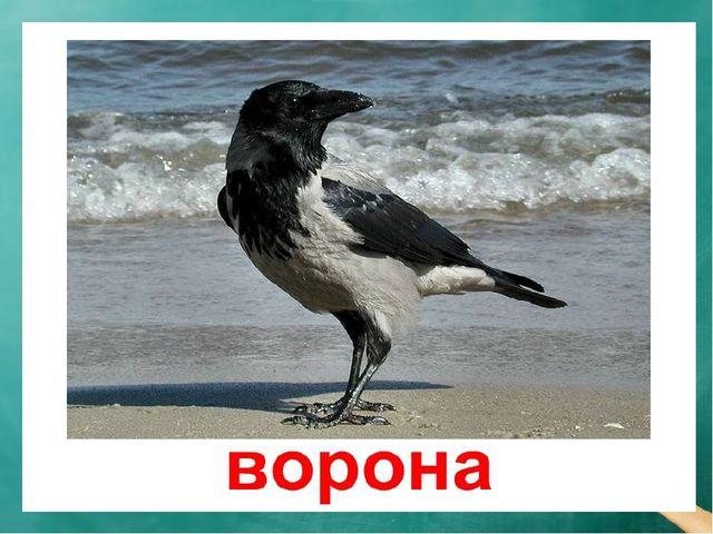Речевая разминка — Кра! — кричит ворона. — Кража! Караул! Грабёж! Пропажа! Во...