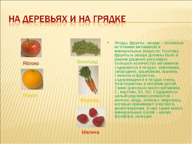 Ягоды, фрукты, овощи – основные источники витаминов и минеральных веществ. По...