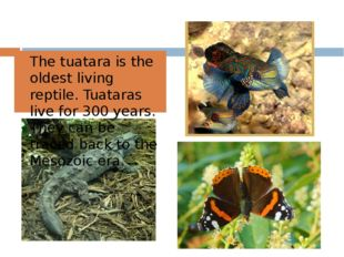 The tuatara is the oldest living reptile. Tuataras live for 300 years. They