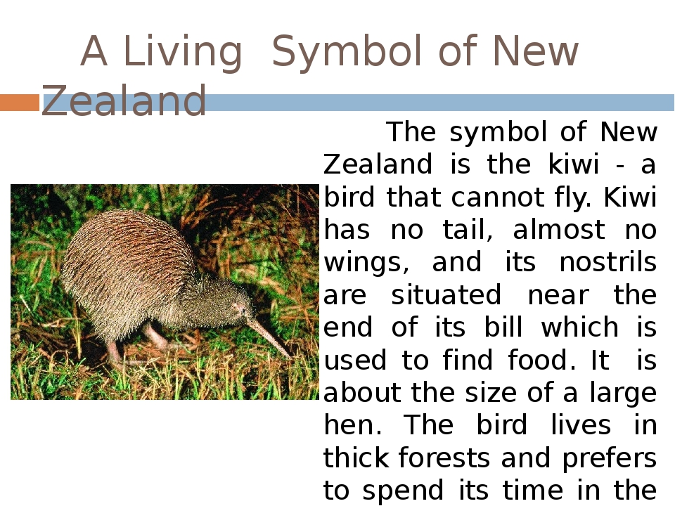A Living Symbol of New Zealand The symbol of New Zealand is the kiwi - a bir...