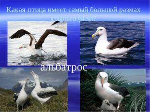 Какая птица имеет самый большой размах крыльев (4 м)? альбатрос