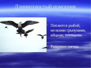 Длиннохвостый поморник Питаются рыбой, мелкими грызунами, яйцами, птенцами. Р