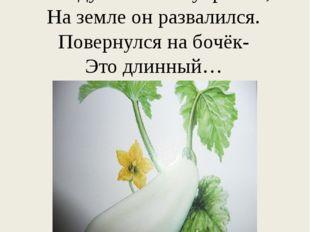 Что за овощ интересный? Говорят, что он полезный, Между листьями укрылся, На