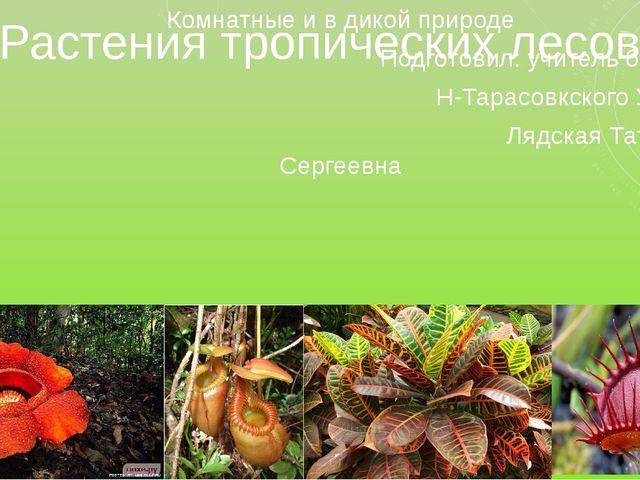 Растения тропических лесов Комнатные и в дикой природе Подготовил: учитель би...