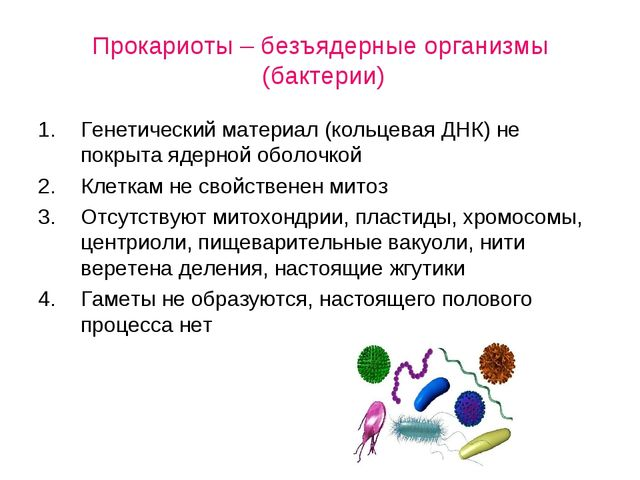 Прокариоты – безъядерные организмы (бактерии) Генетический материал (кольцев...