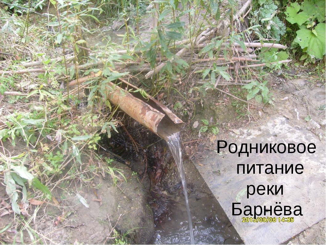 Родниковое питание реки Барнёва