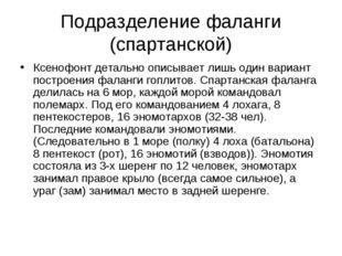 Подразделение фаланги (спартанской) Ксенофонт детально описывает лишь один ва