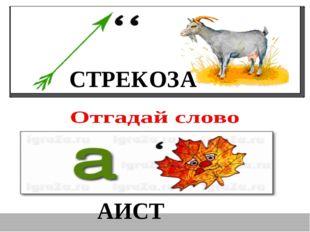 СТРЕКОЗА АИСТ