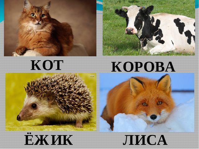 КОТ КОРОВА ЁЖИК ЛИСА
