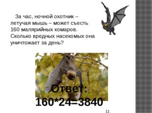За час, ночной охотник – летучая мышь – может съесть 160 малярийных комаров.