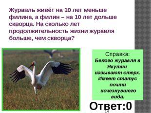Справка: Белого журавля в Якутии называют стерх. Имеет статус почти исчезнув