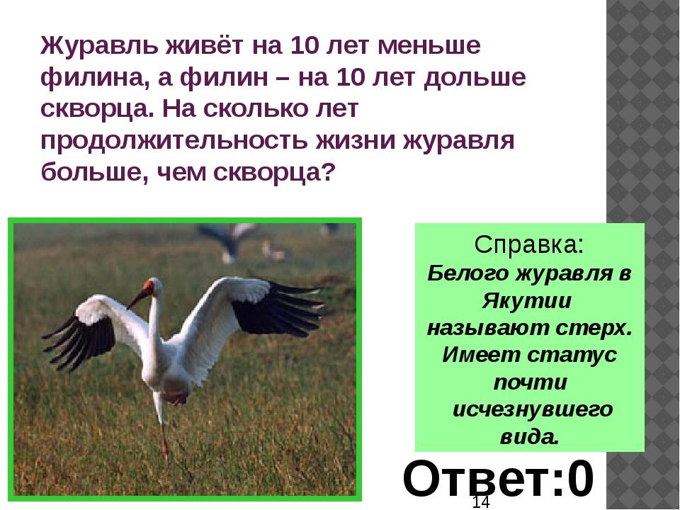 Справка: Белого журавля в Якутии называют стерх. Имеет статус почти исчезнув...