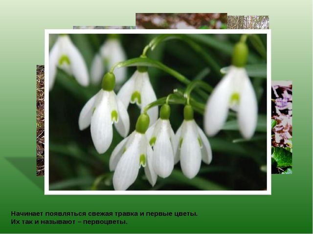 Начинает появляться свежая травка и первые цветы. Их так и называют – первоцв...