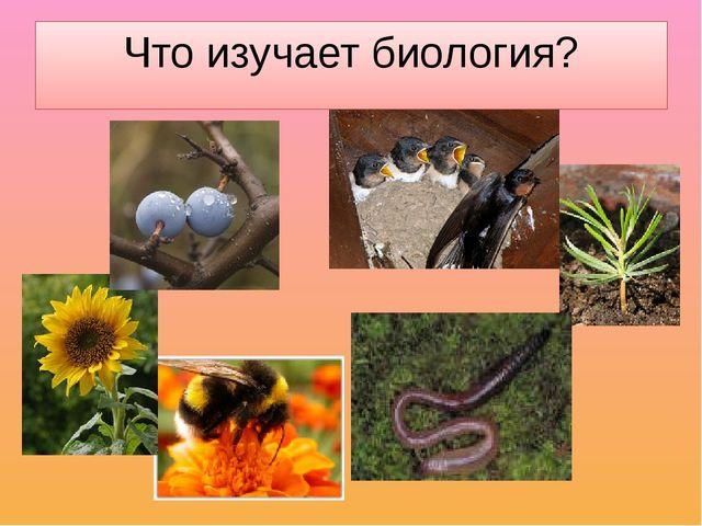 Что изучает биология?