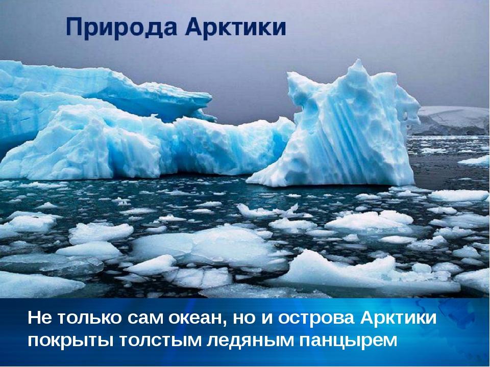 Не только сам океан, но и острова Арктики покрыты толстым ледяным панцырем