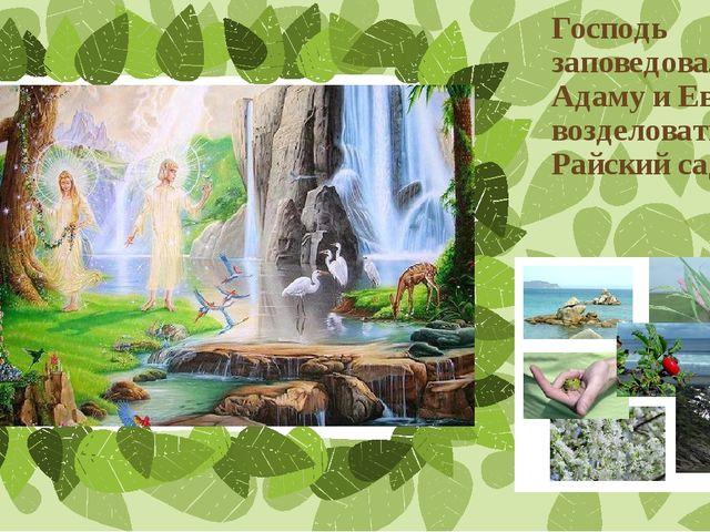 Господь заповедовал Адаму и Еве возделовать Райский сад Подзаголовок