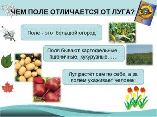 ЧЕМ ПОЛЕ ОТЛИЧАЕТСЯ ОТ ЛУГА? Поле - это большой огород Поля бывают картофельн
