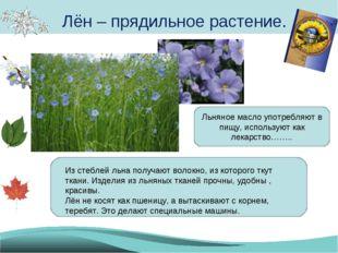 Лён – прядильное растение. Из стеблей льна получают волокно, из которого ткут