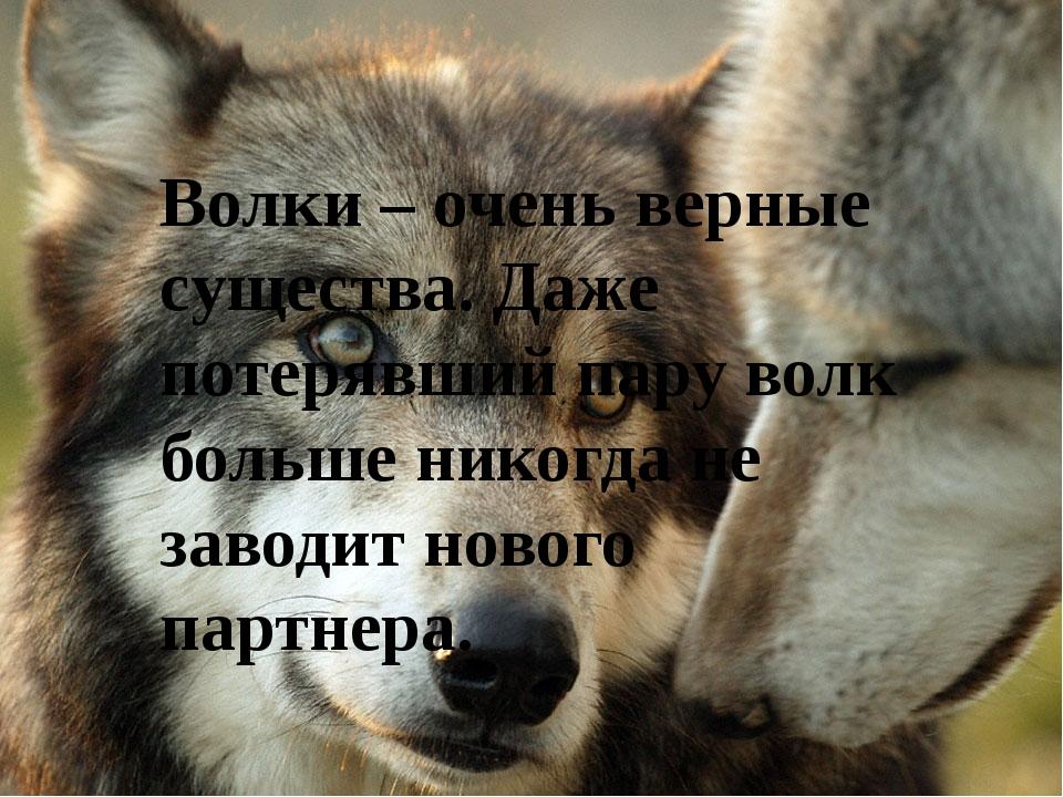 прошлом афоризмы про волков фото этом направлении