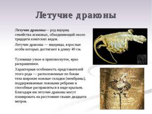 Летучие драконы Летучие драконы— род ящериц семейства агамовых, объединяющий