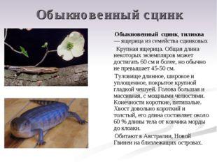 Обыкновенный сцинк Обыкновенный сцинк, тиликва — ящерица из семейства сцинков