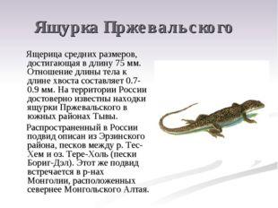 Ящурка Пржевальского Ящерица средних размеров, достигающая в длину 75 мм. Отн