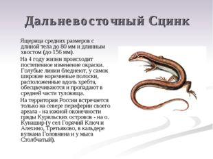 Дальневосточный Сцинк Ящерица средних размеров с длиной тела до 80 мм и длинн