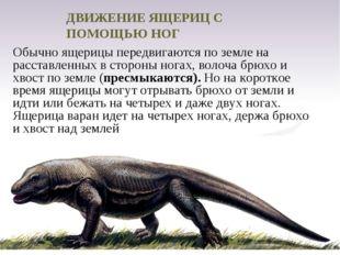 Обычно ящерицы передвигаются по земле на расставленных в стороны ногах, волоч