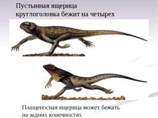 Пустынная ящерица круглоголовка бежит начетырех ногах. Плащеносная ящерица м